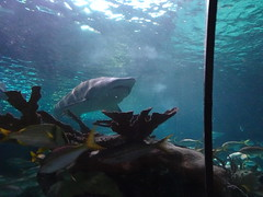 Ripley's Aquarium Of The Smokies - Gatlinburg, Tennessee (41)