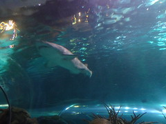 Ripley's Aquarium Of The Smokies - Gatlinburg, Tennessee (31)