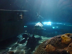 Ripley's Aquarium Of The Smokies - Gatlinburg, Tennessee (25)