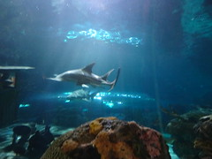 Ripley's Aquarium Of The Smokies - Gatlinburg, Tennessee (24)