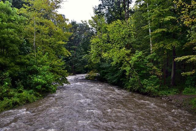 I Have Lingered on the Shores to Watch the Waters of a River Float By (Cuyahoga Valley National Park)
