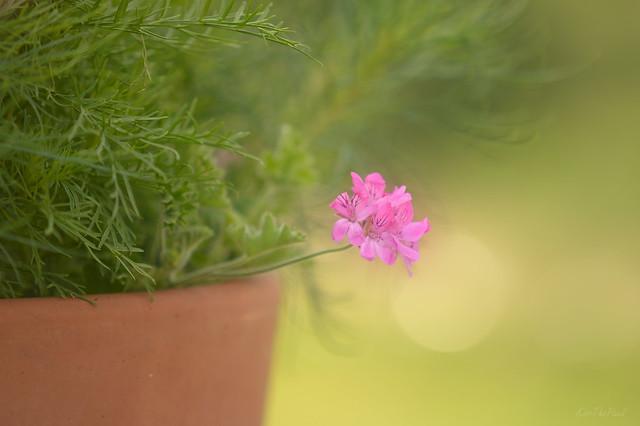 Blooming Pots...