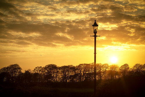 annan harbour birds sunset trees clouds lamppost