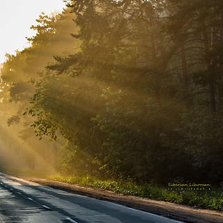 """The Road To The Cemetery"", or ""Early Morning Road In The Forest"" - choose your mood 