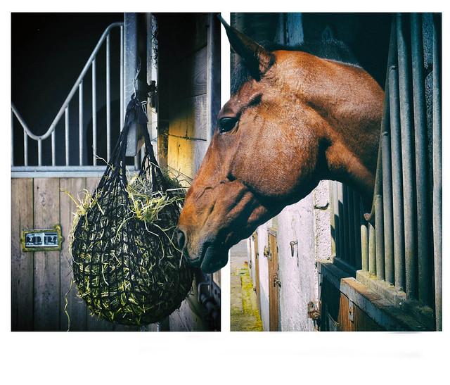 dyptique cheval