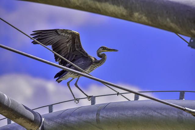 Auf dem Drahtseil / On the tightrope