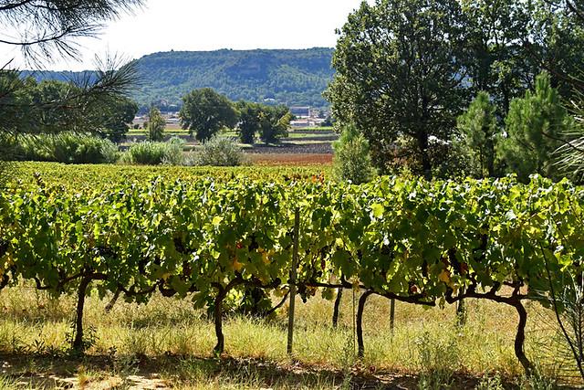 Vineyard in Drôme Provençale