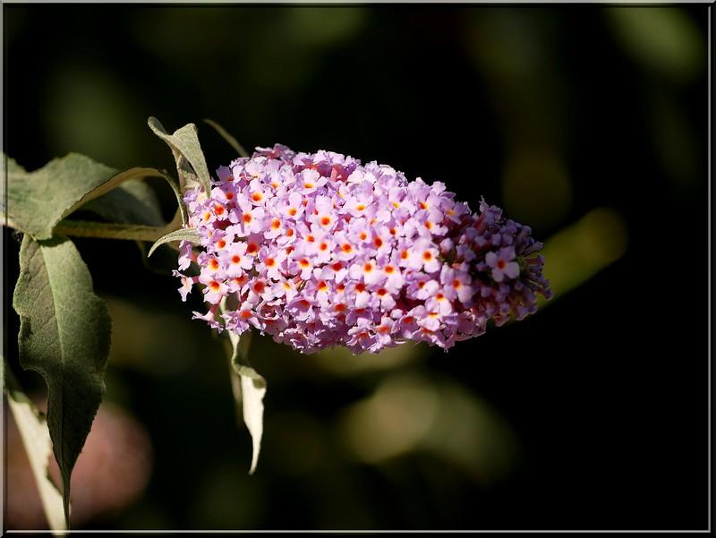 Au jardin des plantes. 48187312707_28f993f213_b