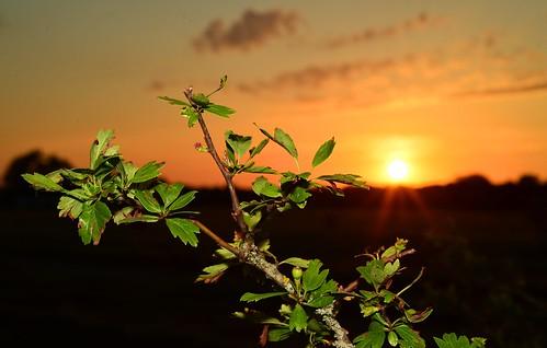 sunset abandoned nature leaves germany deutschland sonnenuntergang flash natur disused blitz blätter runway flugplatz airfield verlassen landebahn startbahn ©allrightsreserved aufgegeben schleisheim oberschleisheim ednx