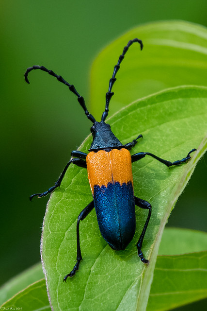 Way cool bug