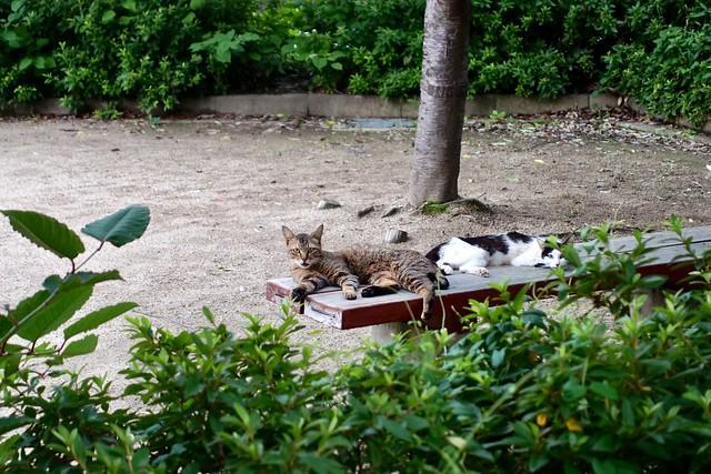 Today's Cat@2019-07-03