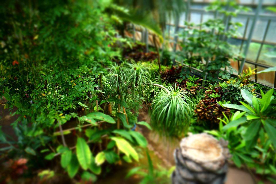 植物園温室ミニチュア風