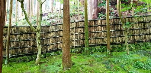 Der Unterschied zwischen dem naturbelassenen Wald (oben) und dem Park des Ginkaku-ji-Tempels (unten)