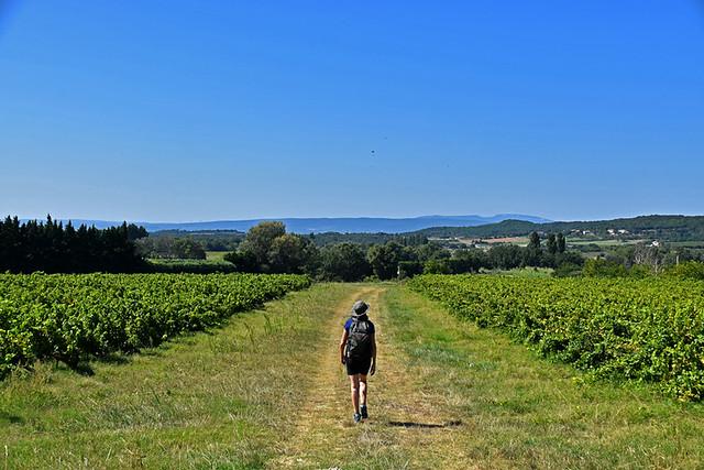 Drôme Provençale, vineyard