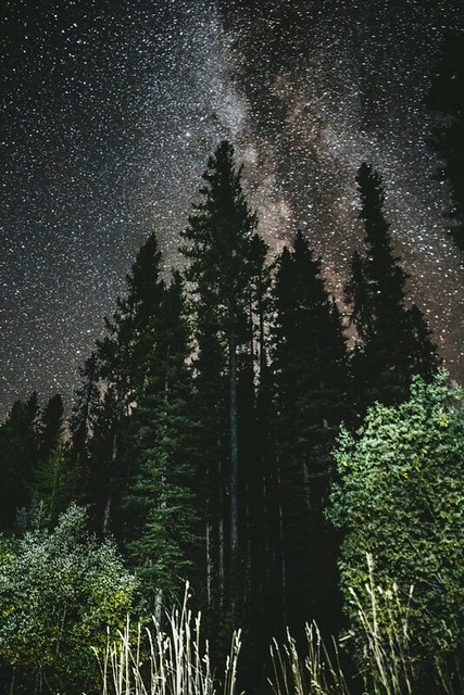 Stars above trees on the Payette National Forest in Idaho