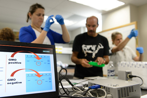 Connecticut high school teachers use DNA analysis to investigate whether food contains GMO modified soy products. (Peter Morenus/UConn Photo)