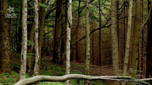 Aduceți Inventarul Forestier în mileniul III