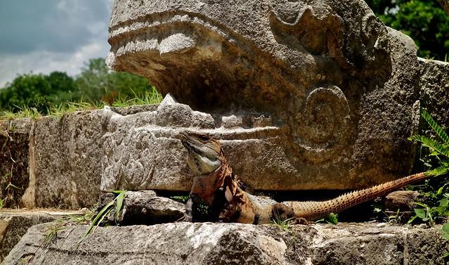 MEXICO, Yucatán, Chichén Itzá,  Leguan vor Drachenkopf,  (serie) 19031/11691