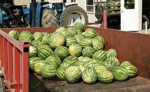WatermelonsMB3