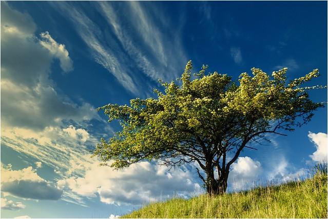 Der Busch auf dem Hügel