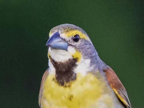 birds mycanon7dmk2400mm