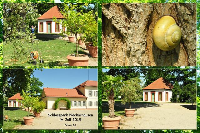 Juli 2019: Neckarhausen - Schlosspark und Eiscafé ... Fotos: Brigitte Stolle