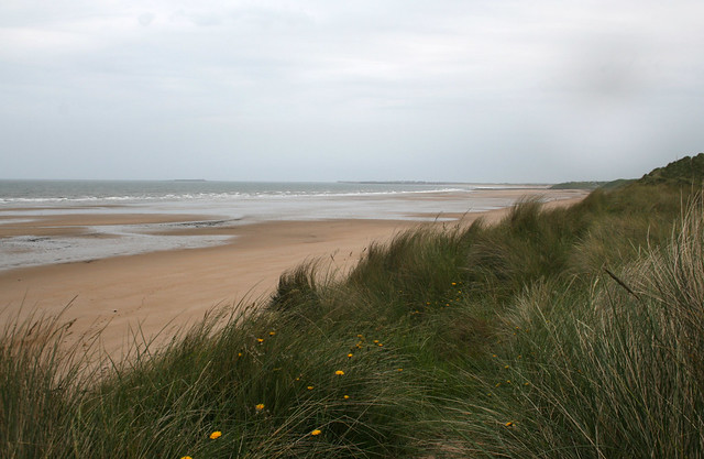 The coast south of Alnmouth