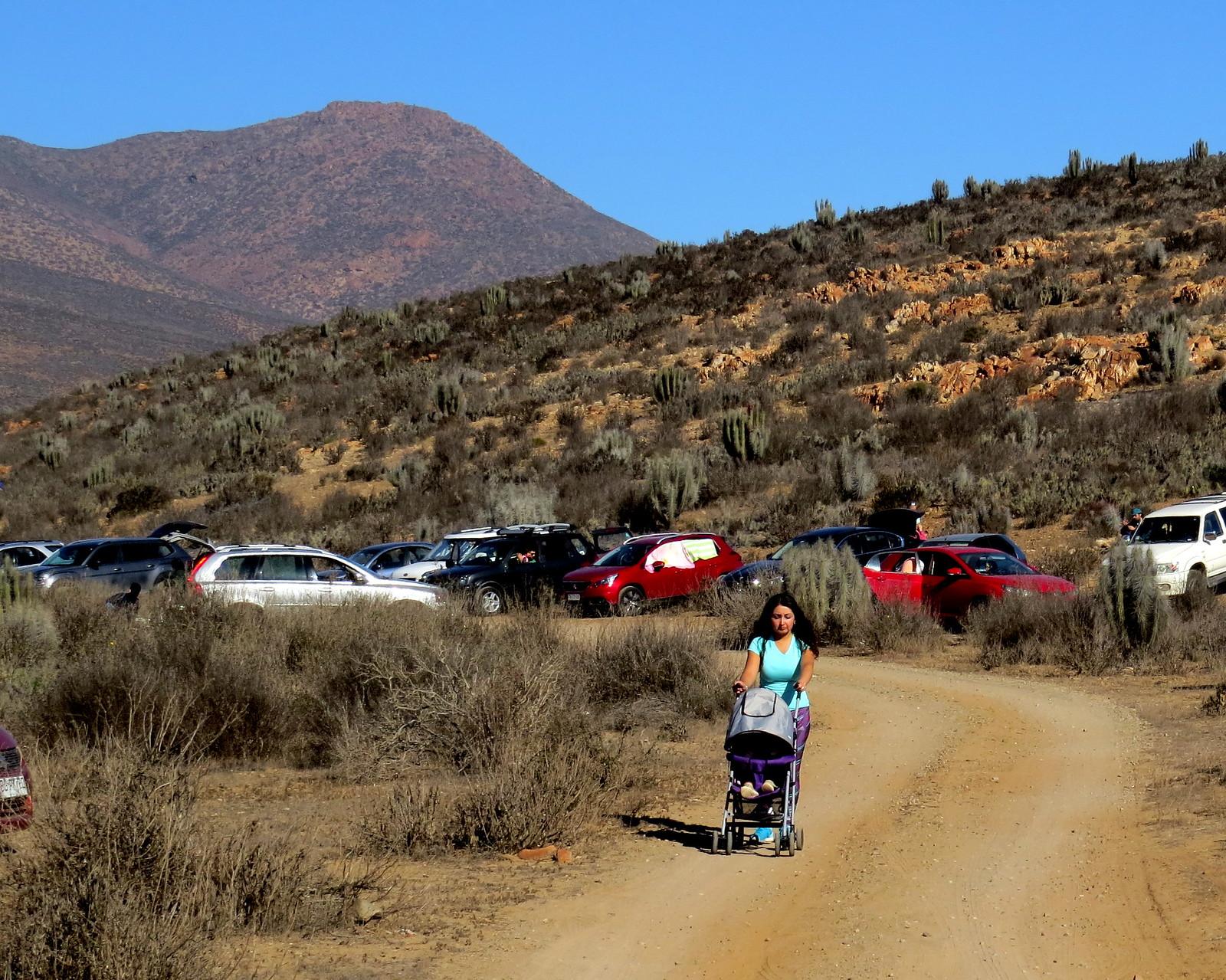 Stroller in the desert