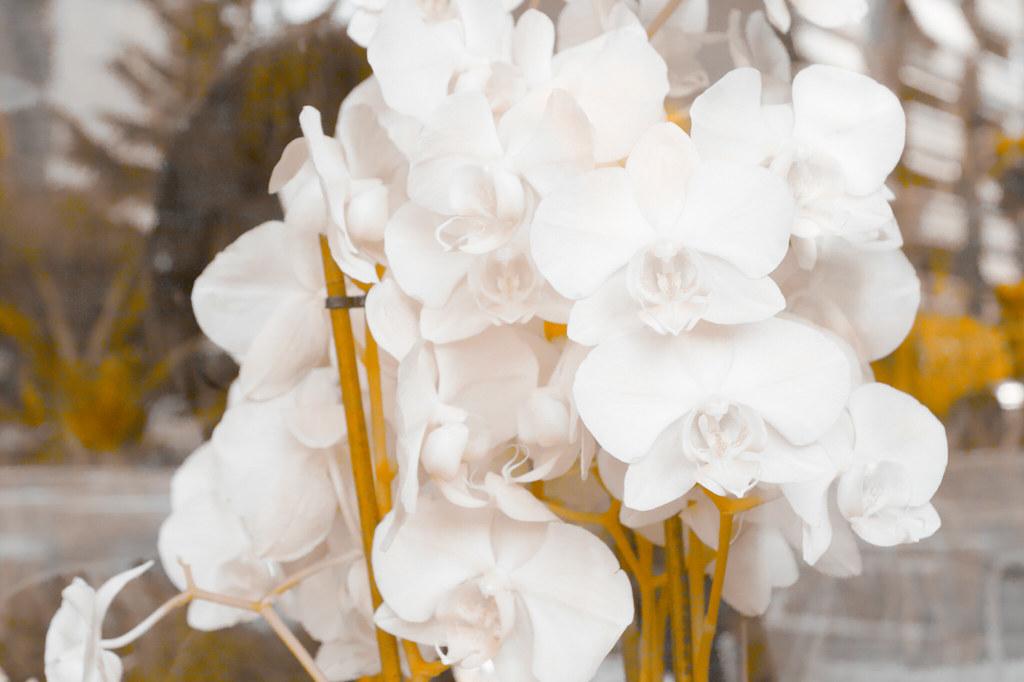 #infraredphotography #ir550nm #ir550nm #sigmainfrared #foveon