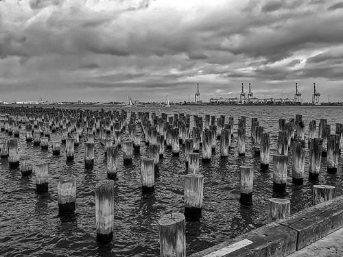 landscape seascape portmelbourne princespier piles timber rows weathered bw monochrome iphone portphillip albertpark bayside pattern array