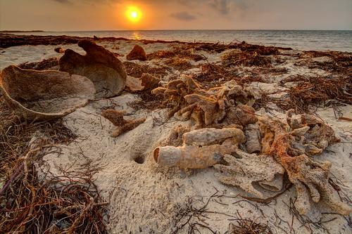 hdr floridakeys bahiahonda statepark sandspurbeach sponges porifera sunrise sand