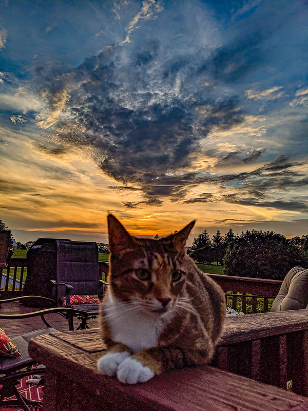 Spice on the deck rail, with a sunset behind her.