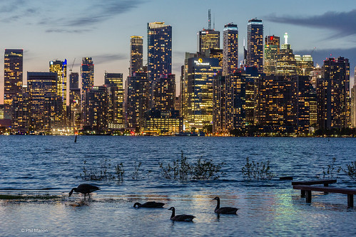 Avian tourists enjoy an evening meal while taking in the Toronto skyline | by Phil Marion (176 million views - THANKS)