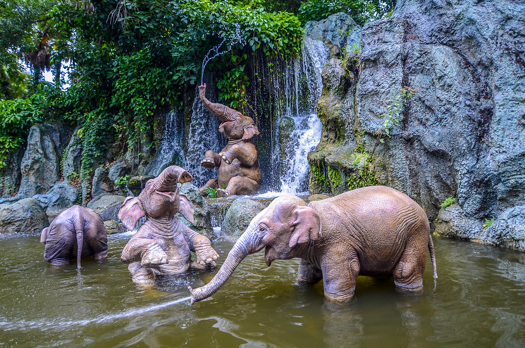 Elephant Pool from side Jungle Cruise MK