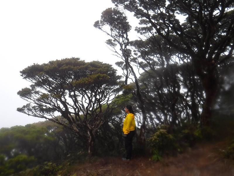 Dwarf trees