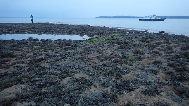 Living shores of Beting Bronok, Jul 2019