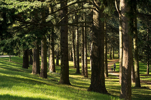csm_nature_parcdeparilly_promenade_laurencedaniere_1200_2c37bbb189