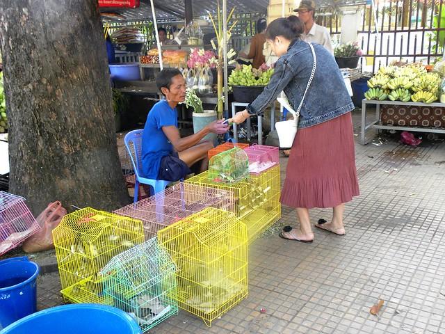 Cambodia - mercato d'uccelli