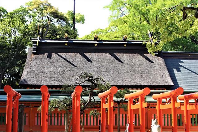 sumiyoshi-gosyuin014
