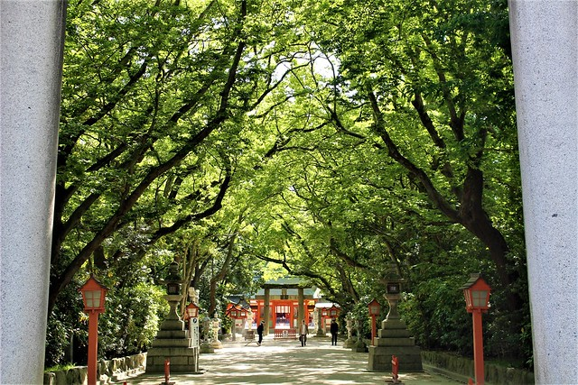 sumiyoshi-gosyuin037
