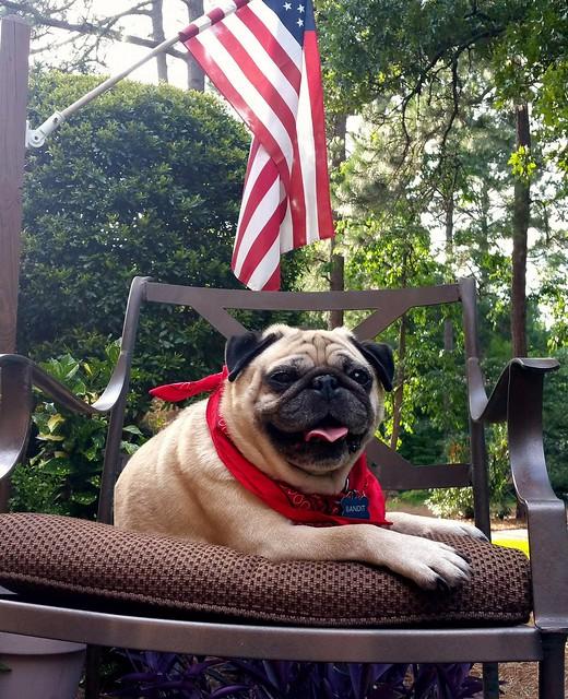 Happy Fourth of July #FourthofJuly #tbt