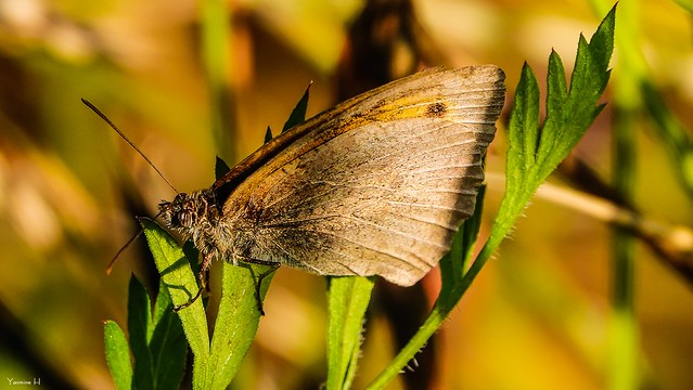 Butterfly - 7029