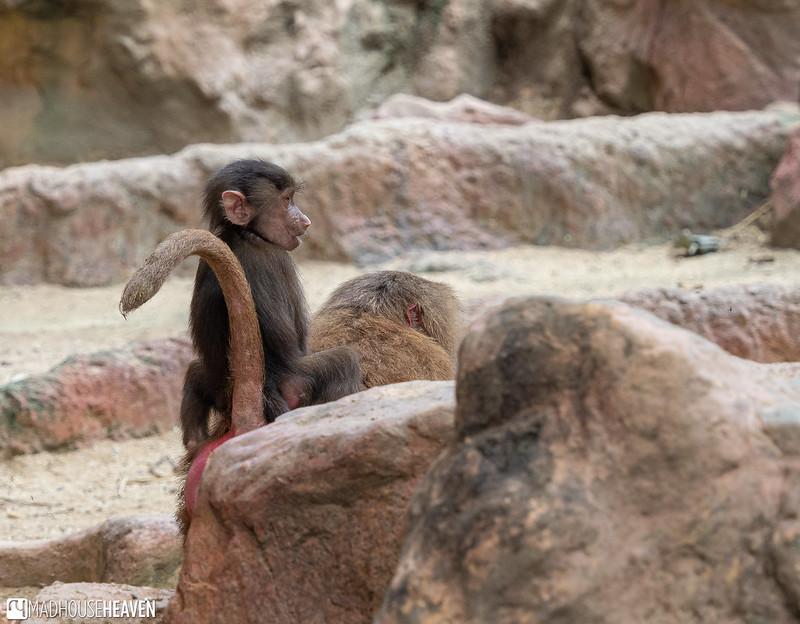 Singapore Zoo - 0733