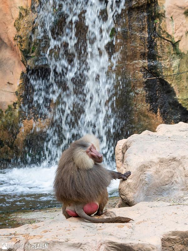 Singapore Zoo - 0709