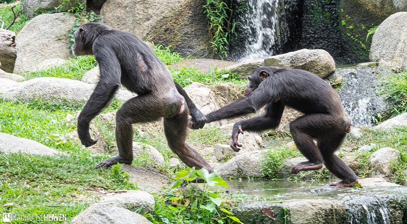 Singapore Zoo - 0678