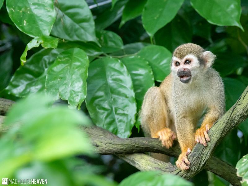 Singapore Zoo - 0520