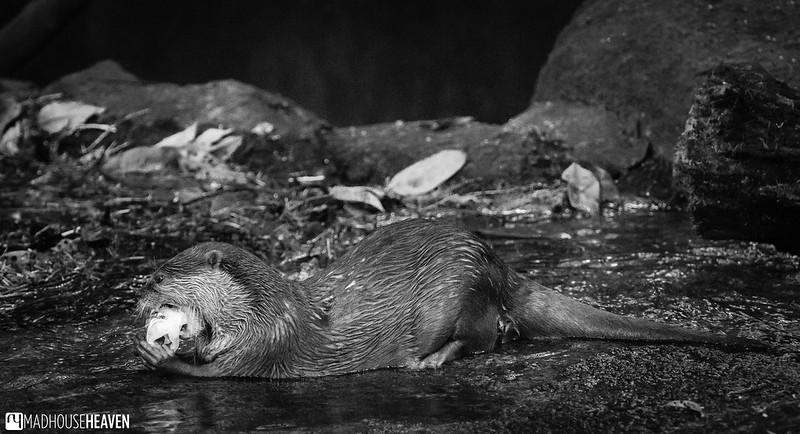 Singapore Zoo - 0573