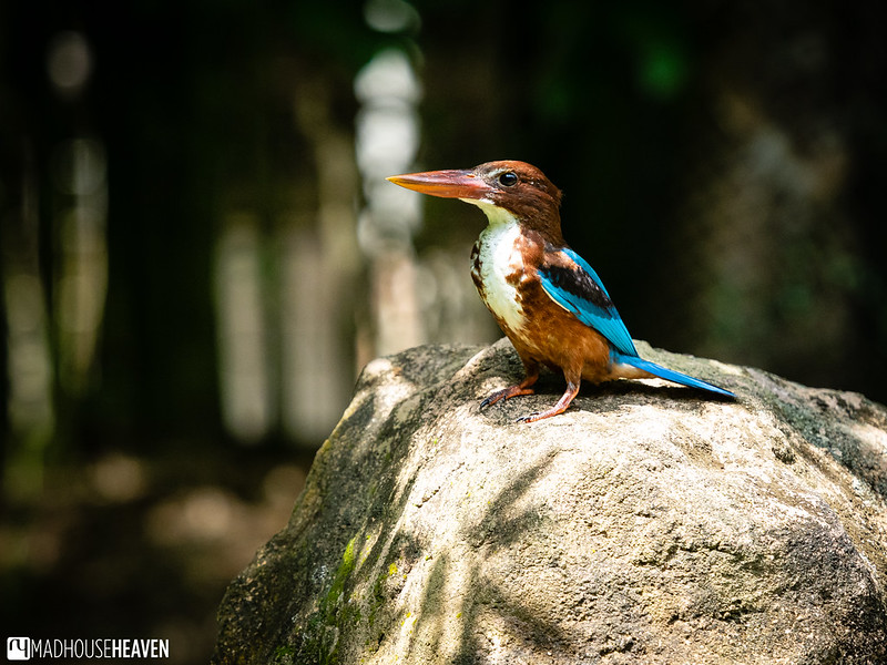 Singapore Zoo - 0505