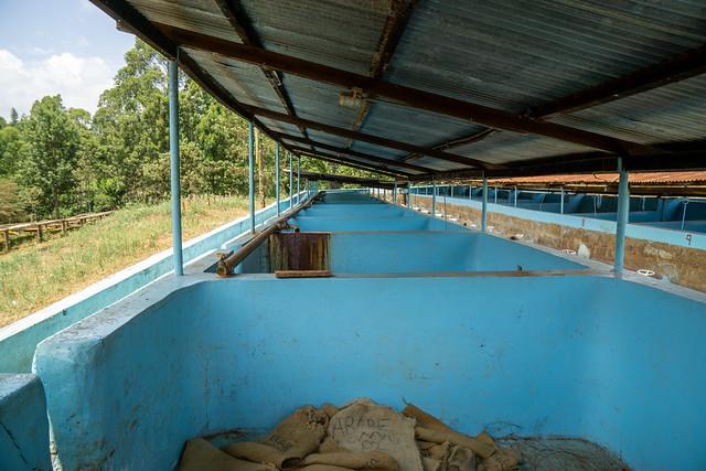Fermentation tanks