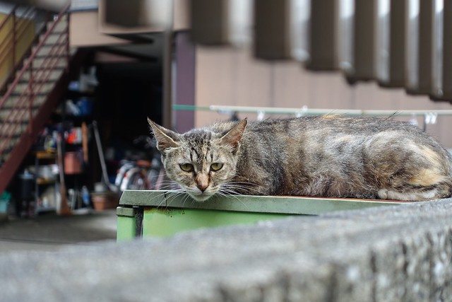 Today's Cat@2019-07-04